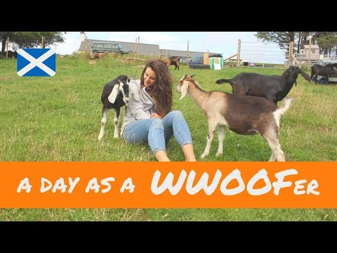 A day in the life of a WWOOFer - Scottish Highlands