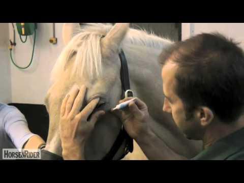 How to Administer Eye Drops/Cream | HorseandRider UK