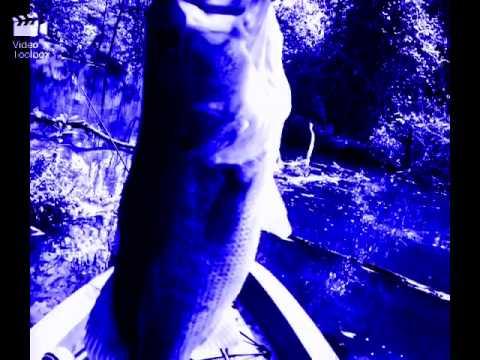 Fishing Wendell nc