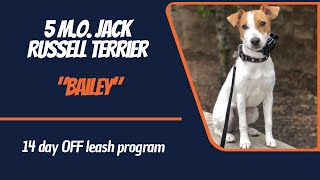 JACK RUSSELL TERRIER / DOG TRAINING