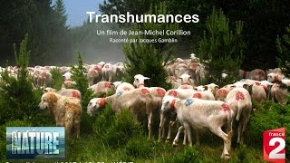 TRANSHUMANCES / 52' HD / Bande Annonce