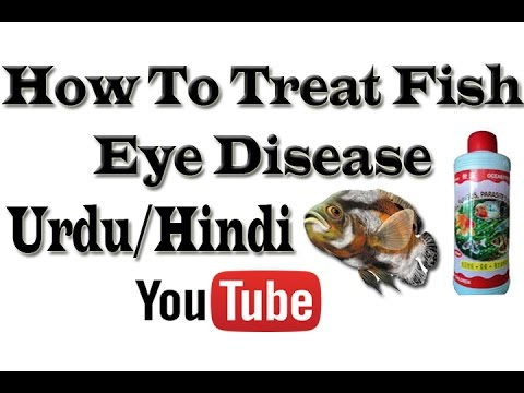 How To Treat Fish Eye Disease Urdu/Hindi