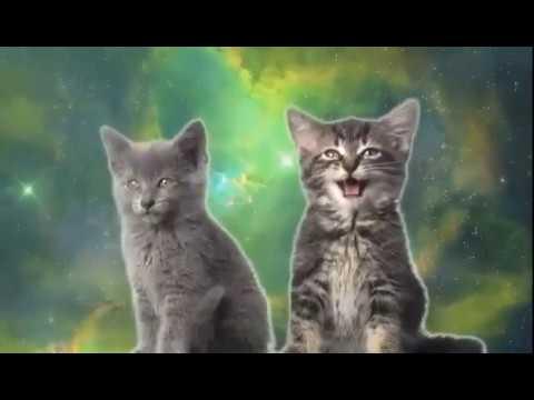 singing cats omg