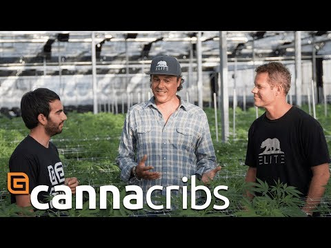 Canna Cribs: E1 - Glass House Greenhouse - Commercial Cannabis Growing Operation in California