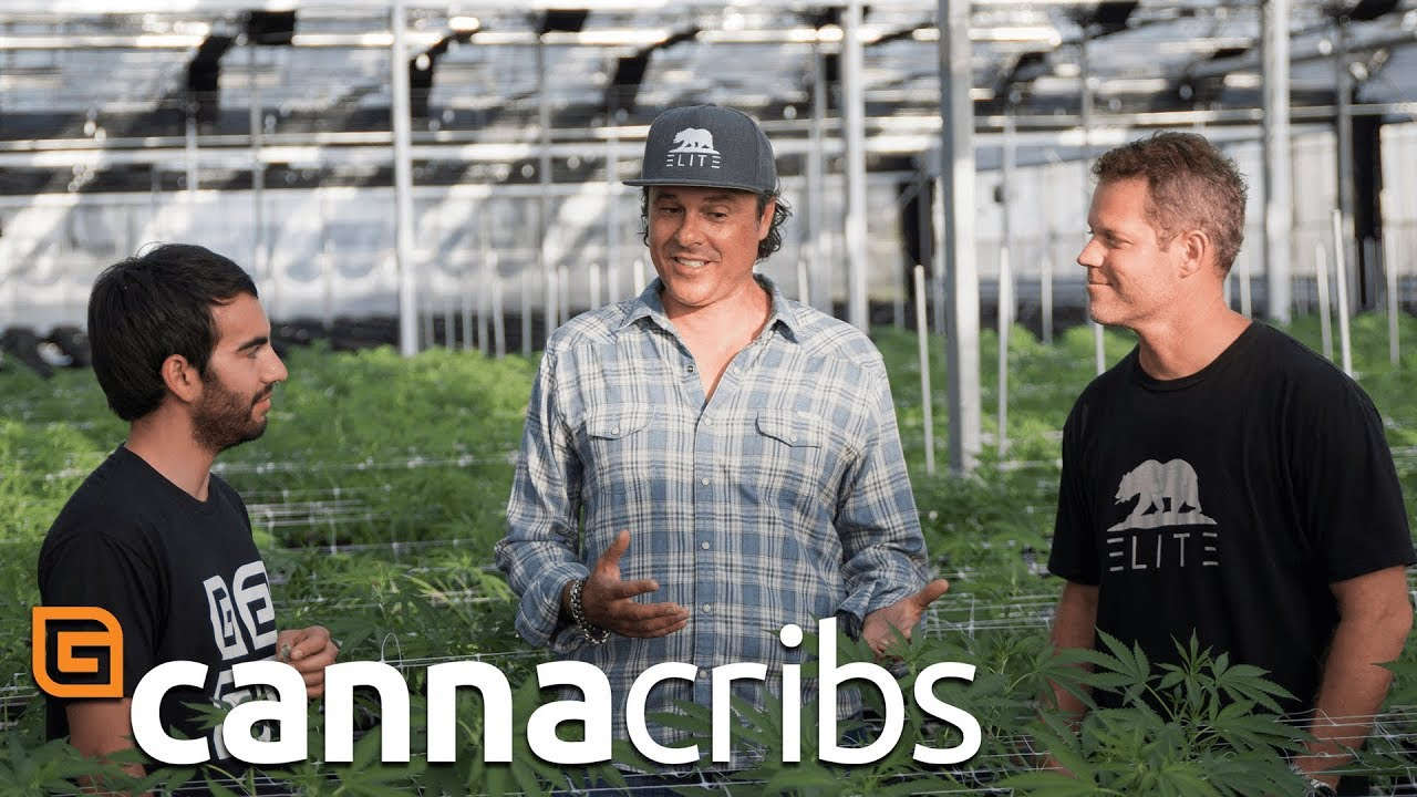 Largest Outdoor Cannabis Farm in World (Canna Cribs Episode