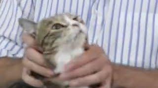 SQUISH THAT CAT