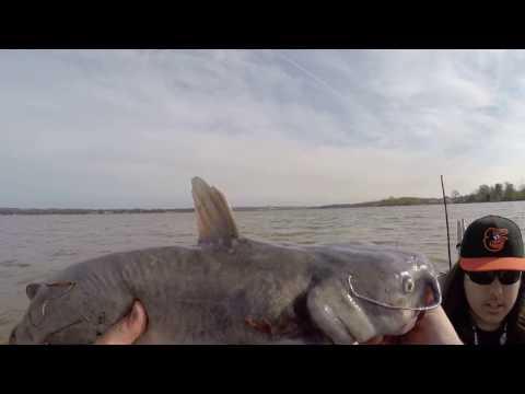 Bush river Catfishing