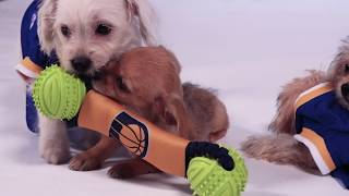 With the help of some puppies from Rocket Dog Rescue, the Warriors ...