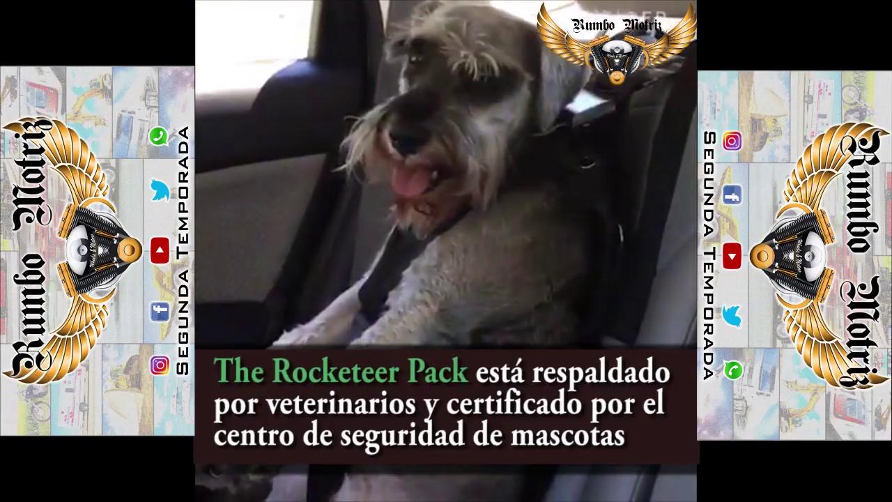 rojo nailon textil negro morado yucool seguridad Leads veh/ículo coche arn/és asiento Tether azul 4/Pack cintur/ón de seguridad ajustable perro de mascota gato