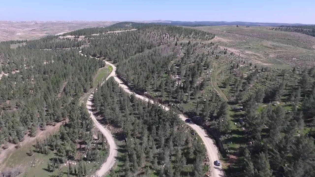 Download Driving through Yatir Forest