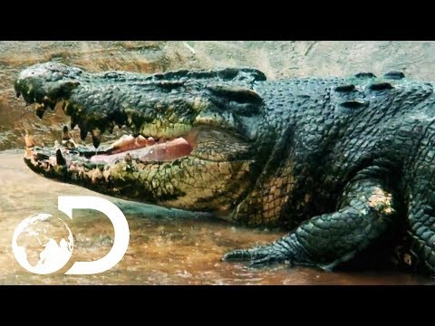 On The Hunt For A 29ft Man-Eating Crocodile | Man-Eating Super Croc