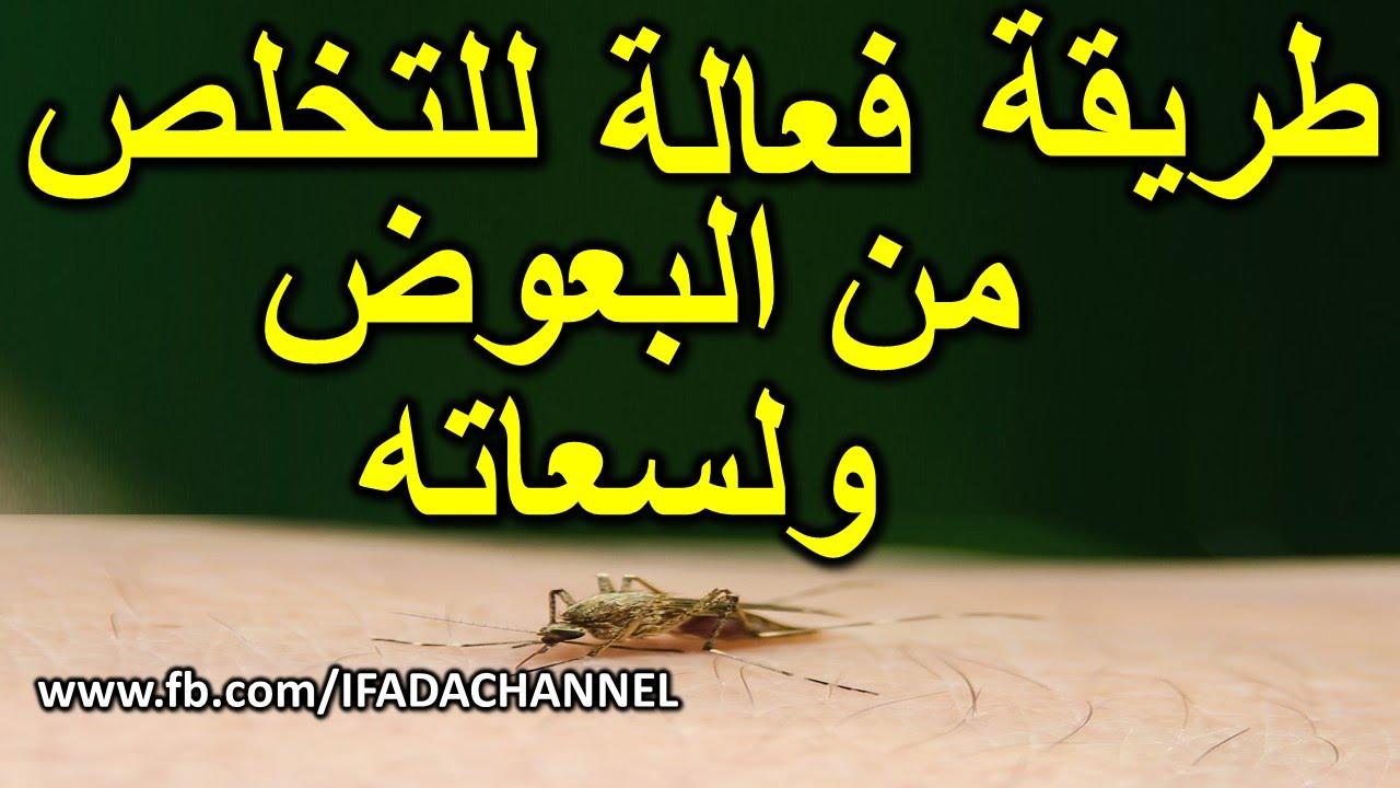 كيف تتخلص من البعوض الناموس داخل المنزل افضل طريقة طبيعية فعالة للقضاء على الناموس نهائيا Youtube