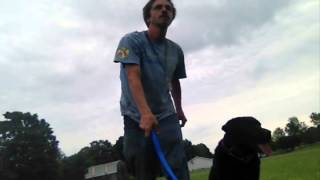 Dog Training with positive reinforcment.........Peter Caine Dog Training Brooklyn