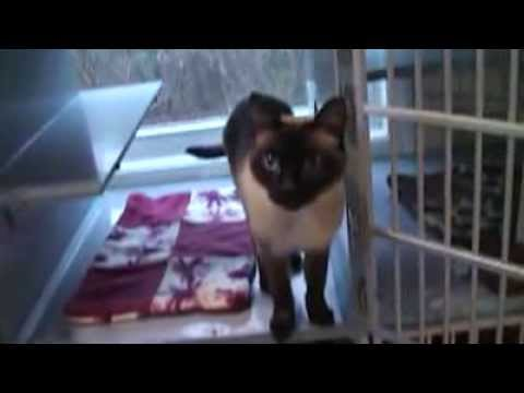 Siamese Cat Rescue Center