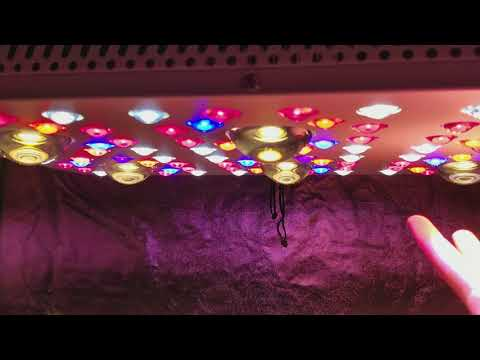 NEW TRUESUN 6 LED GROW LIGHT FREE SHIPPING ACMPR DISCOUNT!