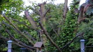 Dawn Chorus  ♪♫ 10 minutes in Spring 2009 ~ British Birds UK ~ wildlife videos