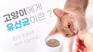고양이에게도 유산균이 필요해요! 유산균의 효능과 급여 …