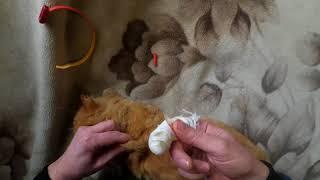 Лечение кота. Как делать укол.