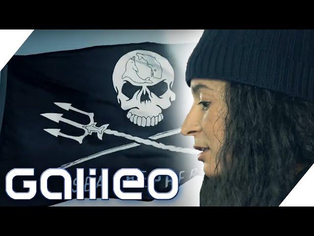 Green Heroes oder Meeres-Piraten? - Meeresschutzorganisation Sea Shepherd  | Galileo | ProSieben