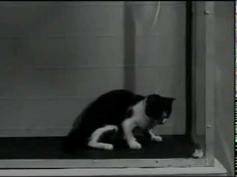 US Army LSD Test on Cat