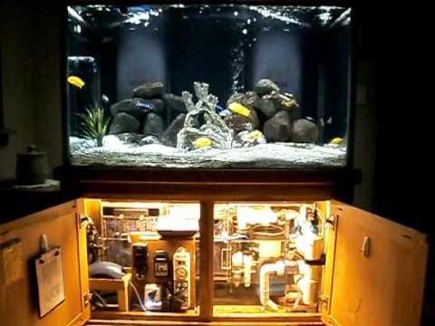Aquarium Sump Operation On A Fresh Water Aquarium Youtube
