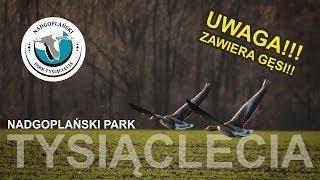 Ornitologiczny foto-weekend w wietrznym Nadgoplańskim Parku Tysiąclecia