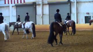 Rocking Horse Classic Hunter Under Saddle - Walk Trot