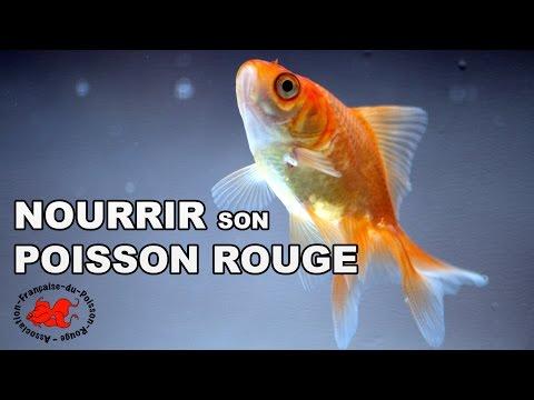 Odile poisson - Comptoir poisson exotique ...