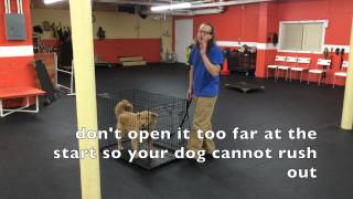 How To Kennel Up your Dog, DIY Dog Training