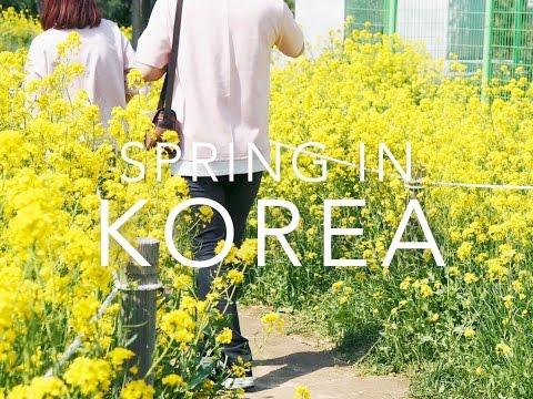 Korea VLOG | Gyeongju/Pohang/Busan