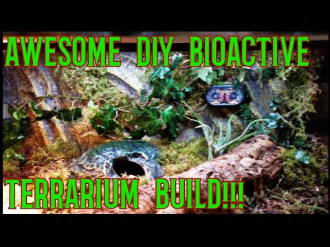 DIY Bioactive Terrarium for Alligator Lizard