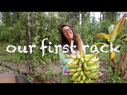 Rough week back on our Big Island OFF GRID Permaculture Farm - Tree Update and Surprise Harvest