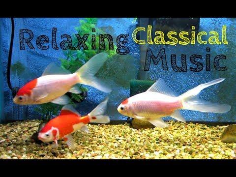 Stress Anxiety Peaceful Relaxing Sleep Music SARASA COMET GOLDFISH