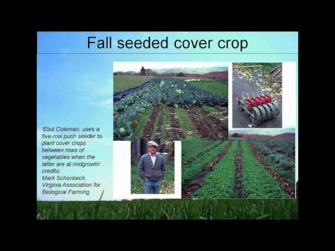 Cover Crop Selection for Organic Farms