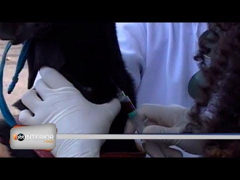 CCZ de Prudente realiza mutirão de chipagem e coleta de sangue