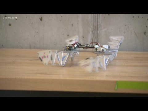 BEARDO - CSU Students Create Robots Of the Future