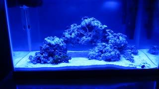 10 Gallon Reef Tank (day 29) Clean Up Crew, Fish And Coral
