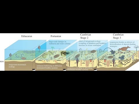 The Cambrian Explosion Pt. 2