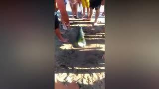 Pesce spiaggiato