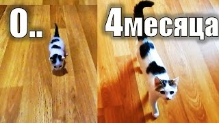 видео СПАСЕНИЕ КОТЕНОЧКА