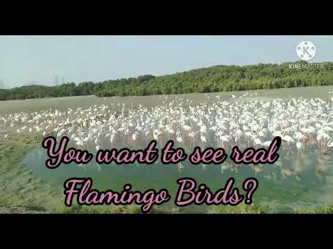 Wild life Sanctuary in Ras al khor Dubai Flamingo Hide 2