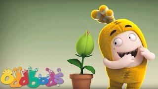 Oddbods | Plant thumbnail