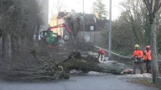 Abattage des arbres rue Fontaine-Neuve, Avallon (89)