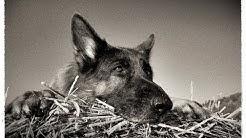 Ausbildung zum Hundeführer des Bundeswehr Doku deutsch 2018