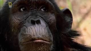 Нападения в джунглях !!! Охота на охотника  ! Животные с National Geographic