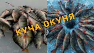 зимняя рыбалка на окуня много окуня окунь выпрыгивает из лунок