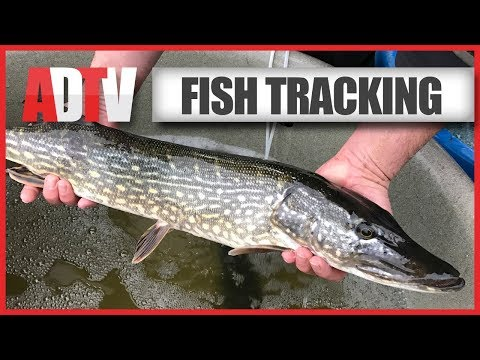 The Northern Broads Fish Tracking Project - Environment Agency - Part 1