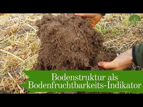 Bodenstruktur als Bodenfruchtbarkeits Indikator | Mulchgemüsebau  | Biogemüsehof Dickendorf (2019)