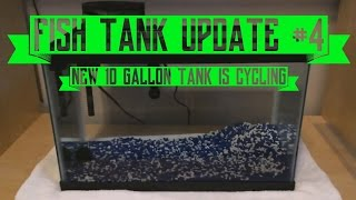 fish aquarium update 4 new 10 gallon tank is cycling what to put in it