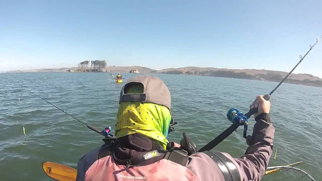 Tomales halibut doovi for Tomales bay fishing report